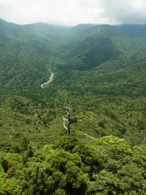太鼓岩より縄文杉を眺める。 壮大さは天下一品!