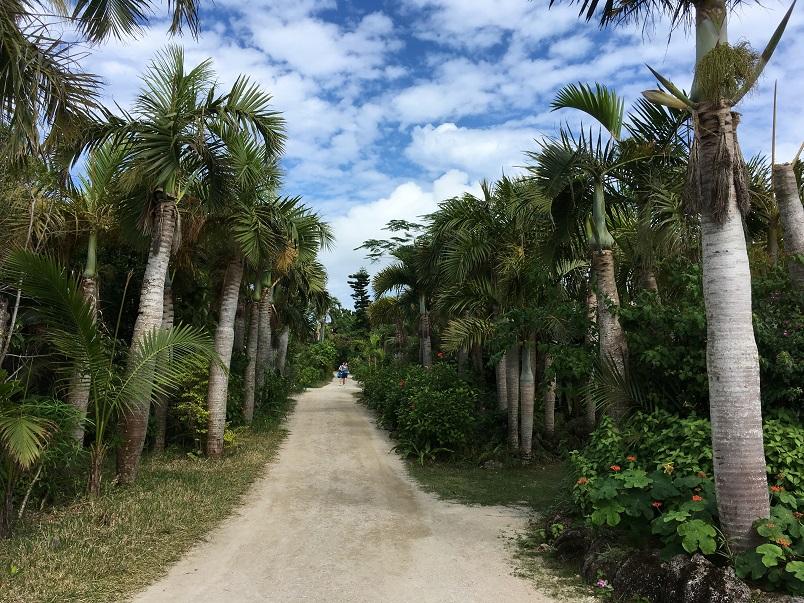 由布島の小道にはヤシの木が。
